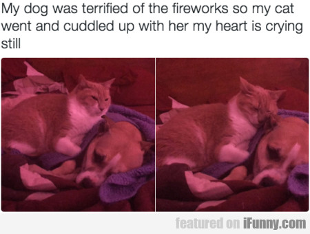 My Dog Was Terrified Of The Fireworks So My Cat...