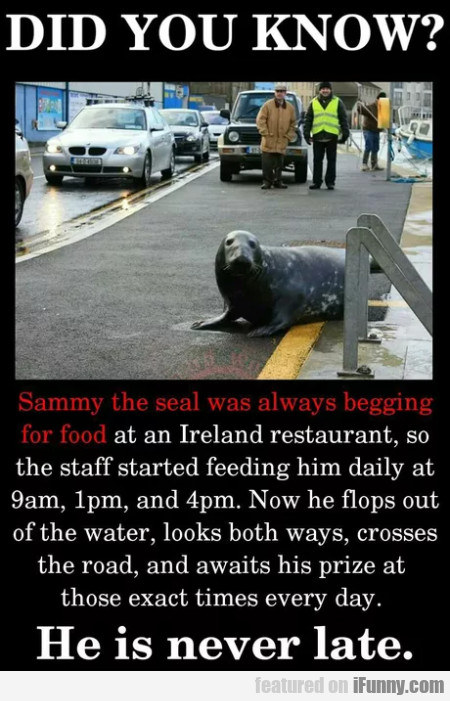 Did You Know? - Sammy The Seal Was Always...