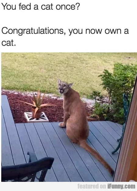 You Fed A Cat Once - Congratulations, You Now...