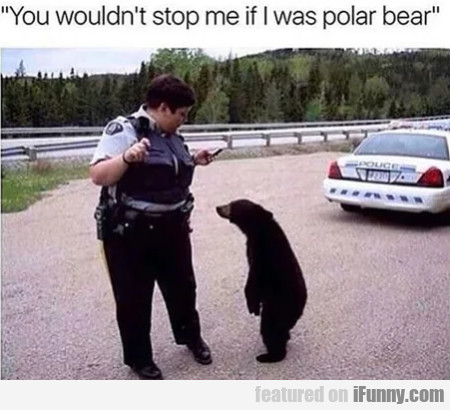 You Wouldn't Stop Me If I Was Polar Bear
