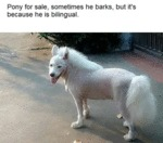 Pony For Sale, Sometimes He Barks, But It's...