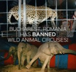 Bucharest, Romania Has Banned Wild Animal Circuses