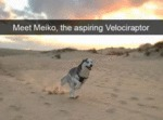 Meet Meiko, The Aspiring Velociraptor