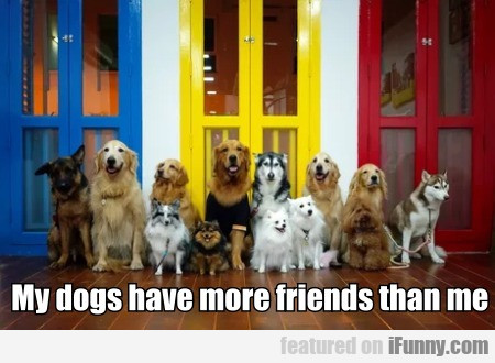 My Dogs Have More Friends Than Me