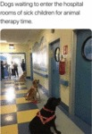 Dogs Waiting To Enter The Hospital Rooms Of Sick..