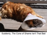 Suddenly. The Cone Of Shame Isn't That Bad
