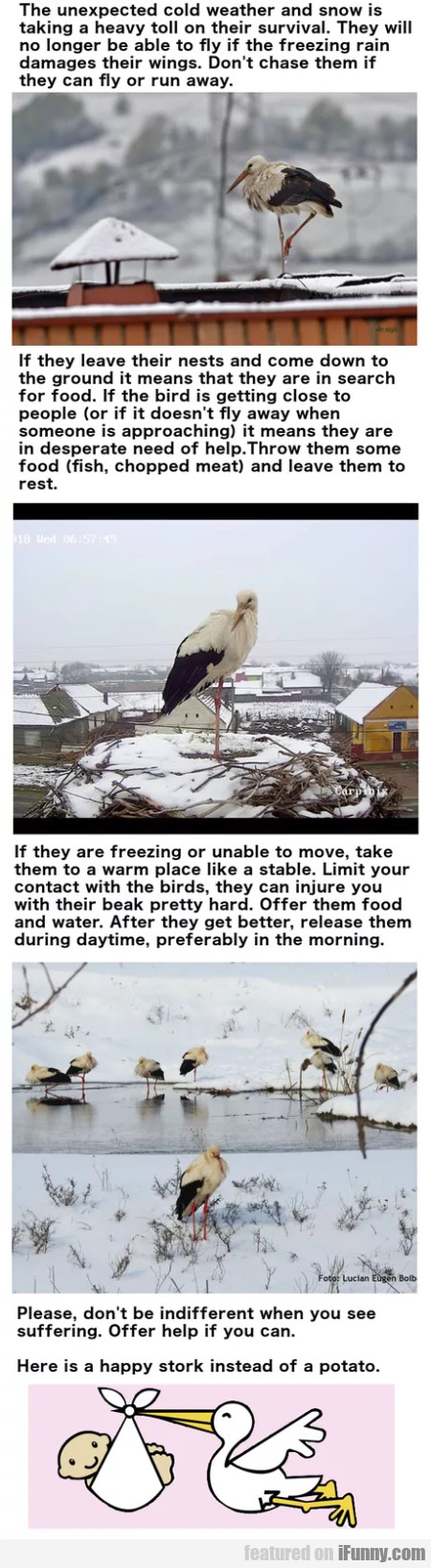 The Unexpected Cold Weather And Snow Is...