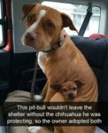 This Pit-bull Wouldn't Leave The Shelter Without..