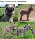 Baby Donkeys Are So Underrated