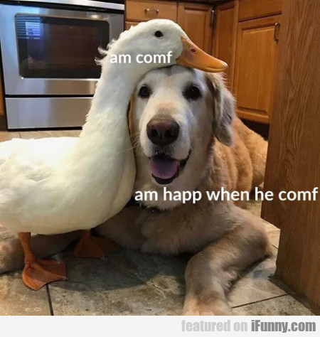 Am Conf - Am Happ When He Comf