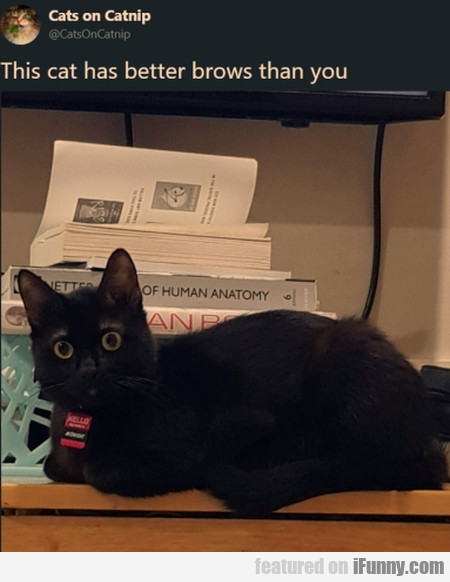 This Cat Has Better Brows Than You