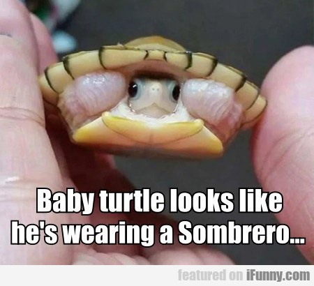 Baby Turtle Looks Like He's Wearing A Sombrero