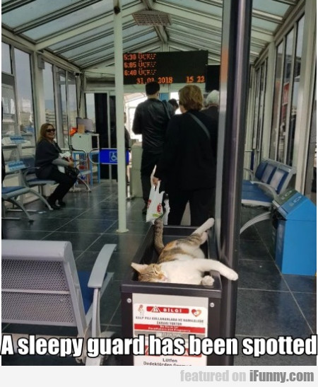 A Sleepy Guard Has Been Spotted