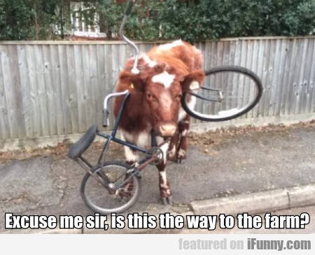 Excuse Me Sir, Is This The Way To The Farm