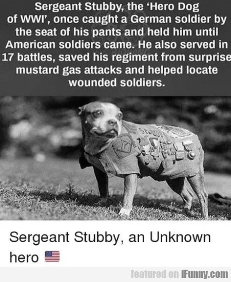 Sergeant Stubby, The Hero Dog Of Wwi, Once...