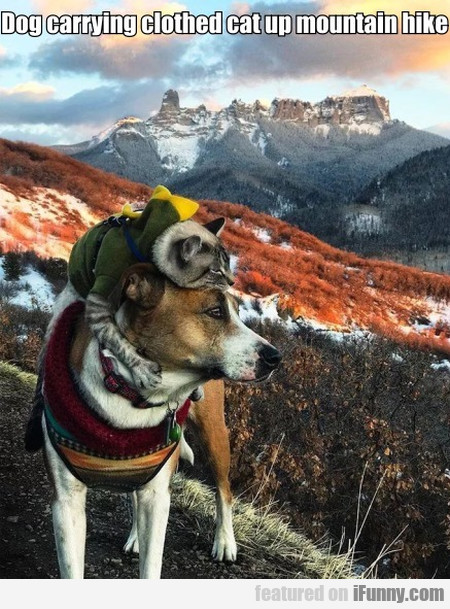Dog Carrying Clothed Cat Up Mountain Hike