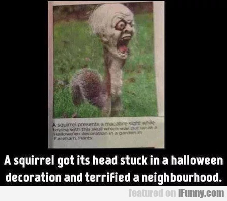 A Squirrel Got Its Head Stuck In A Halloween...