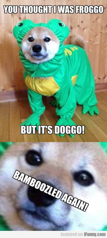 You Thought I Was Froggo - But It's Doggo!