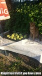 Khajiit Has Fruit If You Have Coins...