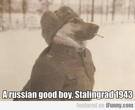 A Russian Good Boy, Stalingrad 1943