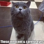 These Innocent & Careful Eyes