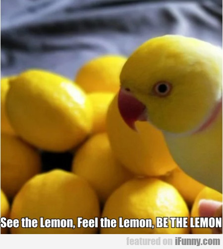 See The Lemon, Feel The Lemon, Be The Lemon