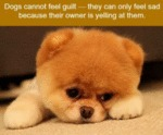 Dogs Cannot Feel Guilt - They Can Only Feel Sad...