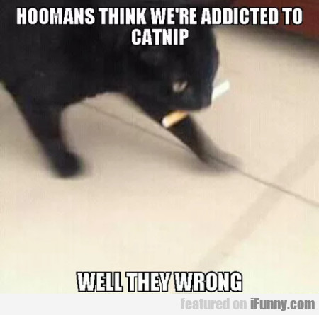 Hoomans think we're addicted to catnip well...