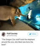 The Oregon Zoo Staff Took The Elephant Around...