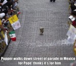 Pupper Walks Down Street Of Parade In Mexico For..