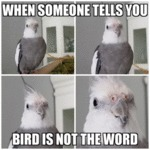 When Someone Tells You Bird Is Not The Word...