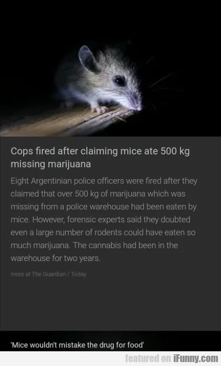 Cops Fired After Claiming Mice Ate 500 Kg..