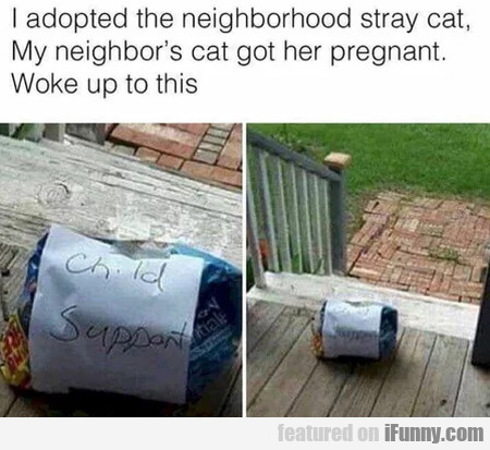 I Adopted The Neighborhood Stray Cat...