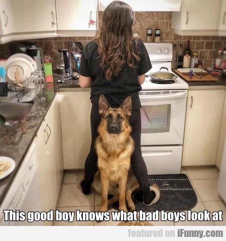 This Good Boy Knows What Bad Boys Look At...
