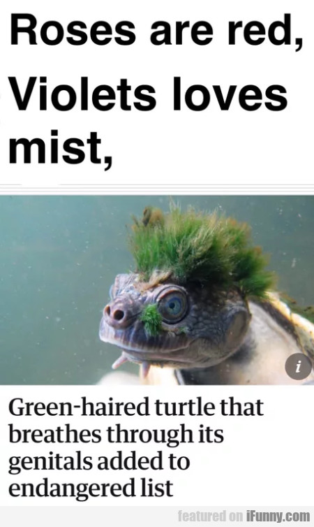 Roses Are Red, Violets Loves Mist, Green-haired...