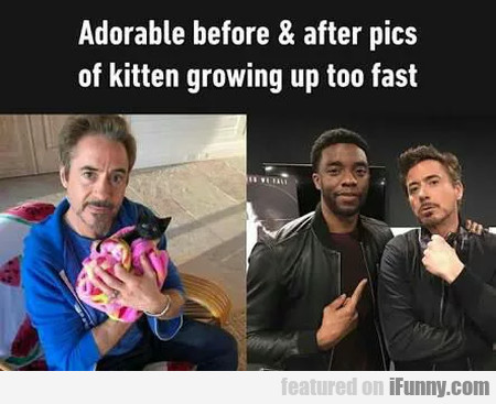 Adorable Before & After Pics Of Kitten Growing...