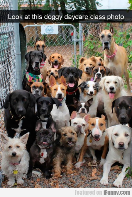 Look At This Doggy Daycare Class Photo...