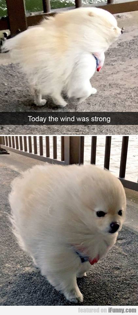 Today The Wind Was Strong