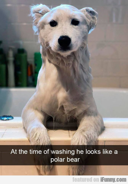 At The Time Of Washing He Looks Like...