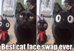 Best Cat Face Swap Ever
