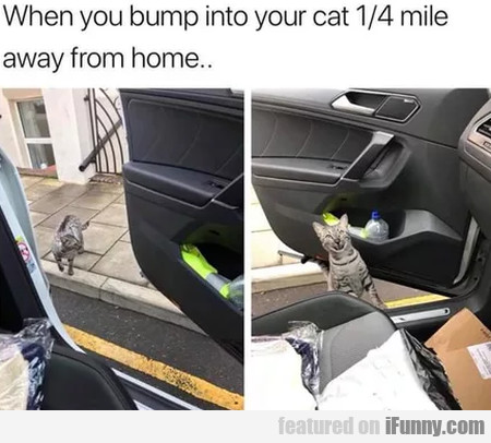 When you bump into your cat 1 4 miles away from...