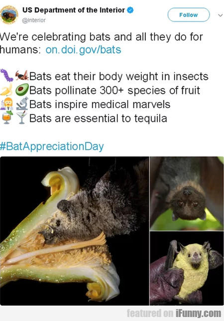 We're Celebrating Bats And All They Do For...