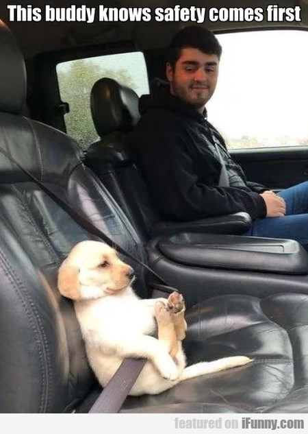 This Buddy Knows Safety Comes First