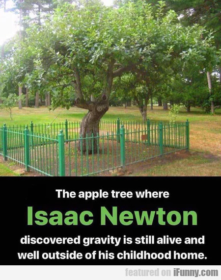 The Apple Tree Where Isaac Newton Discovered...