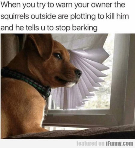 When You Try To Warn The Owner The Squirrels...