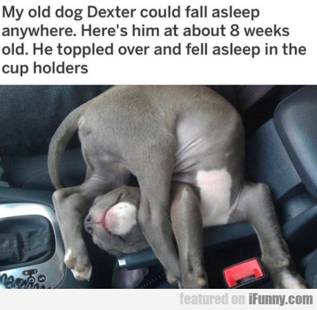 My Old Dog Dexter Could Fall Asleep Anywhere..