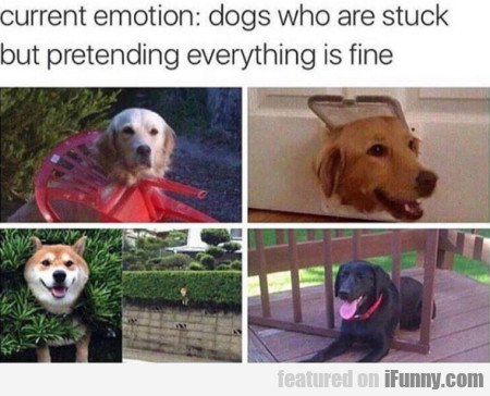 Current Emotion - Dogs Who Are Stuck But...
