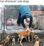 Me Whenever I See Dogs