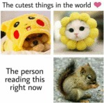 The Cutest Things In The World