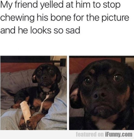 My friend yelled at him to stop chewing his bone..